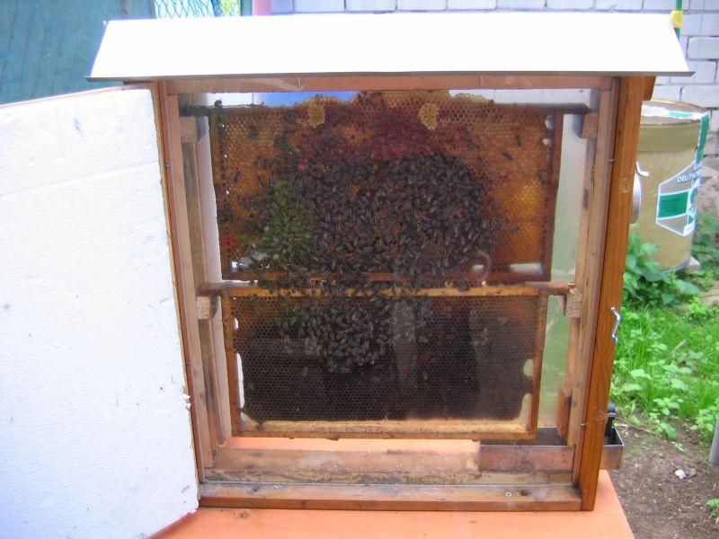 Bienenlehrgarten_2010_02